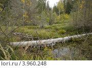 Купить «Болото», фото № 3960248, снято 9 января 2012 г. (c) Кузьминов Юрий Юрьевич / Фотобанк Лори