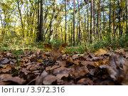Опавшие листья. Стоковое фото, фотограф Андрей Корж / Фотобанк Лори