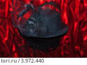 Купить «Черная женская шляпка, украшенная перьями, цветком из ленты и вуалью», фото № 3972440, снято 20 октября 2012 г. (c) Сергей Дубров / Фотобанк Лори