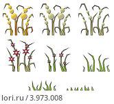 Цикл роста растения. Стоковая иллюстрация, иллюстратор Якунин Алексей / Фотобанк Лори
