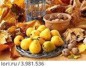 Купить «На столе засыпанном опавшими листьями лежат груши и орехи», фото № 3981536, снято 1 ноября 2012 г. (c) Олеся Сарычева / Фотобанк Лори