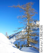 Зимний солнечный день во французских Альпах. Стоковое фото, фотограф Виктор Андреев / Фотобанк Лори