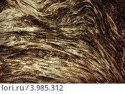 Фон деревянной поверхности. Стоковое фото, фотограф Алексей Макшаков / Фотобанк Лори