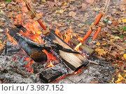 Купить «Приготовление сосисок на костре», эксклюзивное фото № 3987152, снято 21 октября 2012 г. (c) Алёшина Оксана / Фотобанк Лори