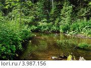 Зелень и вода. Стоковое фото, фотограф Юлия Алесич / Фотобанк Лори
