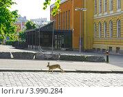 Купить «Животные в городе. Заяц бежит по улице (фокус на зайце)», эксклюзивное фото № 3990284, снято 5 июля 2012 г. (c) Валерия Попова / Фотобанк Лори