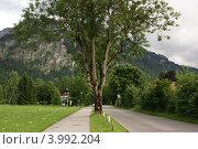У подножия Альп. Стоковое фото, фотограф Оскар Митревиц / Фотобанк Лори