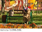 Купить «Старушка сидит, задумавшись, на лавочке на фоне детской игровой площадки», эксклюзивное фото № 3996596, снято 29 сентября 2012 г. (c) Щеголева Ольга / Фотобанк Лори