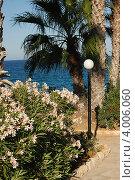 Дорога к морю с пальмами и цветущими кустами. Стоковое фото, фотограф Бугаенко Татьяна / Фотобанк Лори