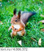 Купить «Белка на зеленой траве в осенний солнечный день», фото № 4006372, снято 29 сентября 2012 г. (c) Екатерина Овсянникова / Фотобанк Лори