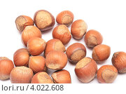 Купить «Неочищенная лесные орехи фундук на белом фоне», фото № 4022608, снято 13 ноября 2012 г. (c) Насыров Руслан / Фотобанк Лори