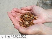 Купить «Необработанный янтарь в женских руках», эксклюзивное фото № 4025520, снято 19 июля 2008 г. (c) Алексей Гусев / Фотобанк Лори