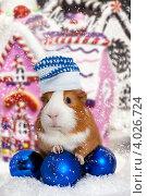 Купить «Морская свинка в зимней шапке с новогодними игрушками», фото № 4026724, снято 16 июля 2019 г. (c) Ковалев Василий / Фотобанк Лори