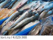 Купить «Свежая рыба на прилавке супермаркета», фото № 4029988, снято 19 ноября 2006 г. (c) Шутов Игорь / Фотобанк Лори