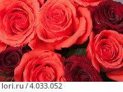 Купить «Фон из алых роз», фото № 4033052, снято 19 ноября 2012 г. (c) Екатерина Панфилова / Фотобанк Лори