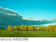 Опушка леса. Стоковое фото, фотограф Александр  Зубцов / Фотобанк Лори