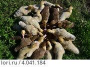 Круглый стол. Стоковое фото, фотограф Ахметзянов тимур / Фотобанк Лори