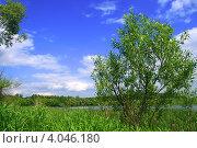 Летний день. Стоковое фото, фотограф Людмила Маркина / Фотобанк Лори