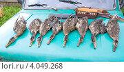 Купить «Охотничьи трофеи - убитые дикие утки на капоте автомобиля», фото № 4049268, снято 21 августа 2012 г. (c) Ласточкин Евгений / Фотобанк Лори