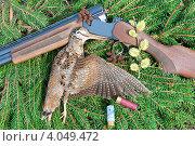 Купить «Вальдшнеп и охотничье ружье на еловых ветках», фото № 4049472, снято 26 апреля 2012 г. (c) Ласточкин Евгений / Фотобанк Лори