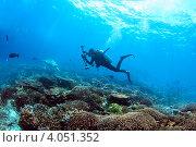 Подводный фотограф над коралловым рифом. Стоковое фото, фотограф Татьяна Белова / Фотобанк Лори