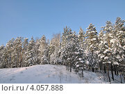 Купить «Опора ЛЭП в зимнем лесу», фото № 4057888, снято 19 ноября 2012 г. (c) Александр Тараканов / Фотобанк Лори