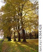 Купить «Осень в парке», фото № 4064428, снято 16 ноября 2006 г. (c) Татьяна Кахилл / Фотобанк Лори