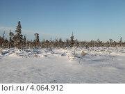 Купить «Болото поздней осенью в Югре. Западная Сибирь», эксклюзивное фото № 4064912, снято 8 ноября 2012 г. (c) Валерий Акулич / Фотобанк Лори