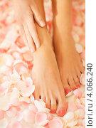 Женские ухоженные ноги на фоне цветочных лепестков. Стоковое фото, фотограф Syda Productions / Фотобанк Лори