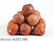 Купить «Фундук», эксклюзивное фото № 4072188, снято 1 декабря 2012 г. (c) Литвяк Игорь / Фотобанк Лори