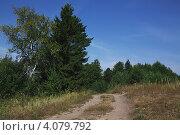 Дорога уходящая в лес. Стоковое фото, фотограф Павел Спирин / Фотобанк Лори