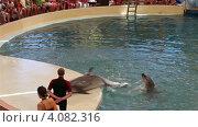 """Купить «Дельфин кружится на суше. Дельфинарий """"Троя"""". Турция. Белек.», эксклюзивный видеоролик № 4082316, снято 3 декабря 2012 г. (c) Юлия Машкова / Фотобанк Лори"""