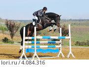 Купить «Всадник на гнедой лошади преодолевает барьер», фото № 4084316, снято 1 ноября 2012 г. (c) Титаренко Елена / Фотобанк Лори