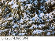 Купить «Зимний фон», фото № 4090504, снято 2 декабря 2012 г. (c) Юрий Викулин / Фотобанк Лори