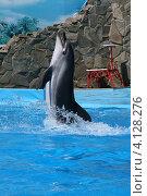 Ейск. Выступление дельфинов в дельфинарии (2012 год). Редакционное фото, фотограф Алексей Гусев / Фотобанк Лори
