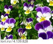 Цветы. Стоковое фото, фотограф Виктор Мандриков / Фотобанк Лори