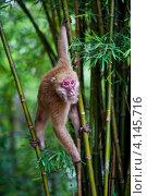 Купить «Дикая обезьяна», фото № 4145716, снято 19 июля 2012 г. (c) Асхат Бардынов / Фотобанк Лори