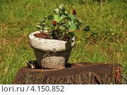 Купить «Декоративный вазон с цветами настурциии (лат. Tropaeolum) на пне дерева», эксклюзивное фото № 4150852, снято 15 июля 2011 г. (c) lana1501 / Фотобанк Лори