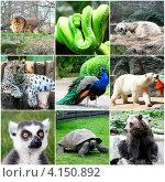 Коллаж с животными. Стоковое фото, фотограф Елена Ковалева / Фотобанк Лори