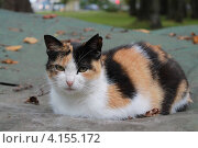 Кошечка. Стоковое фото, фотограф Елена Скрипина / Фотобанк Лори