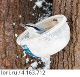 Купить «Поползень сидит в самодельной кормушке зимой», эксклюзивное фото № 4163712, снято 31 декабря 2012 г. (c) Игорь Низов / Фотобанк Лори