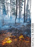 Купить «Пожар в лесу», фото № 4164688, снято 9 мая 2006 г. (c) Миронов Константин / Фотобанк Лори