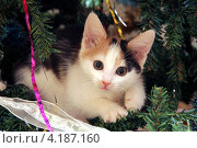 Кошка на елке. Стоковое фото, фотограф Елена Таранец / Фотобанк Лори