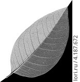 Купить «Лист с прожилками и черном и белом фоне», фото № 4187672, снято 18 февраля 2011 г. (c) Андрей Кузьмин / Фотобанк Лори