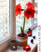 Купить «Цветущий красный гиппеаструм на окне рядом с подсвечниками», фото № 4191628, снято 20 декабря 2012 г. (c) Олеся Сарычева / Фотобанк Лори