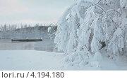 Купить «Заснеженное дерево на берегу теплого озера», видеоролик № 4194180, снято 15 января 2013 г. (c) Кекяляйнен Андрей / Фотобанк Лори
