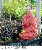 Купить «Улыбающаяся женщина готовит рассаду для высадки в почву в саду», фото № 4201408, снято 2 мая 2012 г. (c) Яков Филимонов / Фотобанк Лори