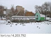 Купить «Московский зоопарк», эксклюзивное фото № 4203792, снято 1 января 2013 г. (c) lana1501 / Фотобанк Лори