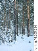 Купить «Зимний пейзаж», фото № 4205284, снято 3 января 2013 г. (c) Икан Леонид / Фотобанк Лори