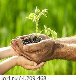 Руки пожилого мужчины и ребенка с зеленым растением. Стоковое фото, фотограф yarruta / Фотобанк Лори